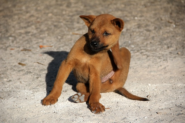 dog day boarding carrollton