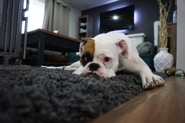 overnight dog boarding carrollton
