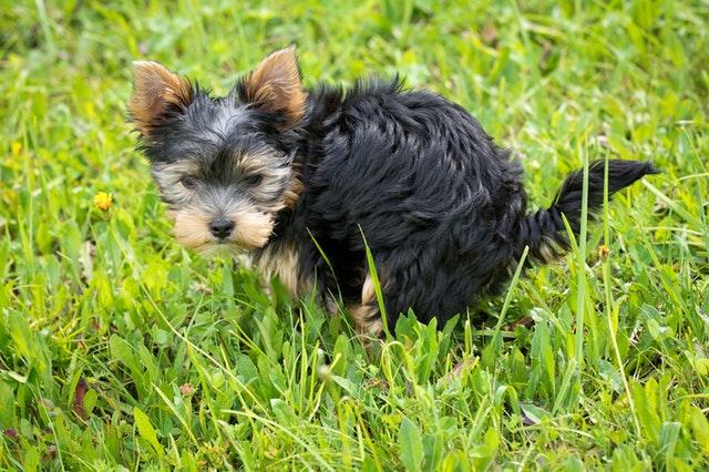 dog day care carrollton
